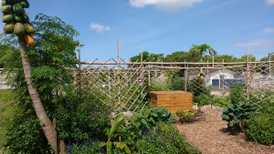 Permaculture and backyard gardening techniques fostered at the Florida House.